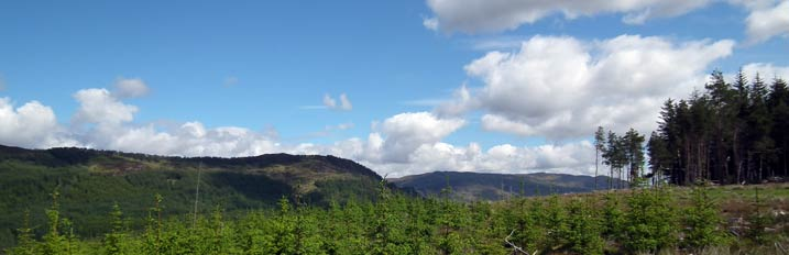 The Laggan Forest Trust - Activities